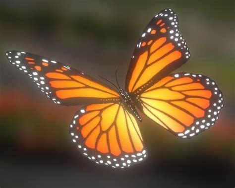 Butterfly 3d Animation 3d Model Animated Butterfly Vr Ar Low Poly Fbx