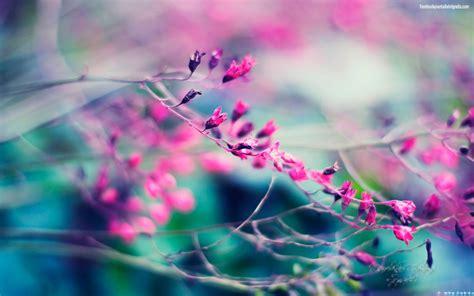 imagenes fondo de pantalla wasap colores hermosos fondo de pantalla flores para compartir