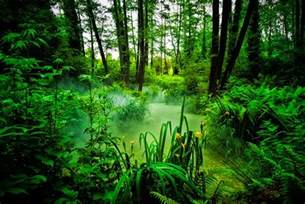 Jungle Landscape Pictures Beautiful Exles Of Landscape Photography 20 Pictures