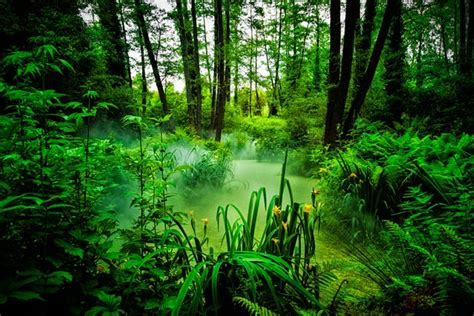 Jungle Landscape Pictures Beautiful Exles Of Landscape Photography 20 Pictures