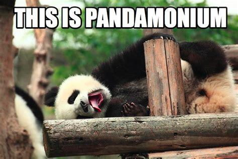 Animal Pun Memes - 15 animal puns ewe can t live without