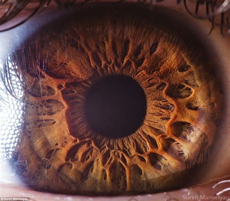 the photographers eye a the eyes have it the iris pictured in remarkable detail by incredible close up shots daily