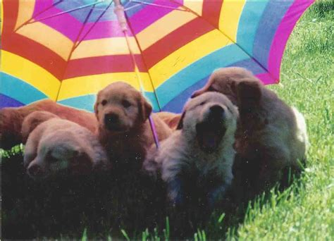 puppies and rainbows rainbow pupies pictures to pin on pinsdaddy