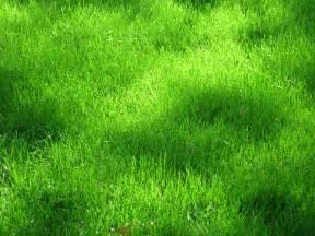 green grass texture texture download photo background