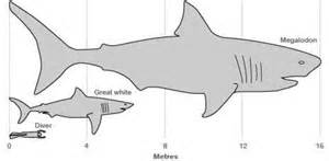 The mighty blue whale would be just a snack to this giant mega shark