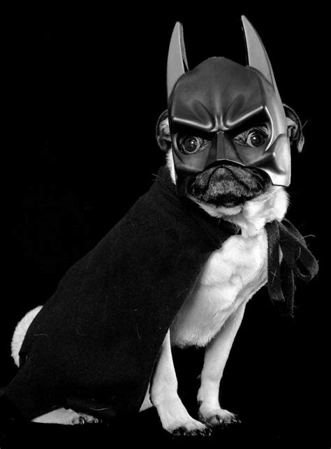 bat pug here are 23 terrifyingly adorable costumes for your pets deadstate