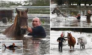 horse owner paddles   surfboard  save animals