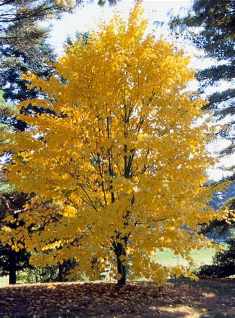 best trees shrubs for fall color midwest living