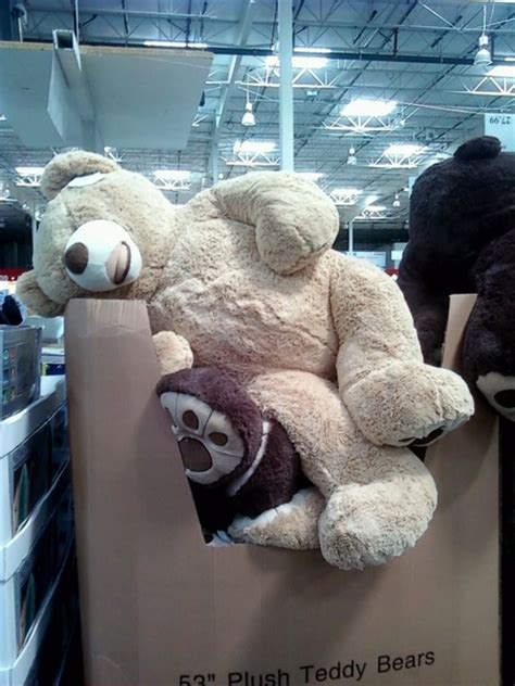 jumbo teddy bears costco teddy we are bringing one home on