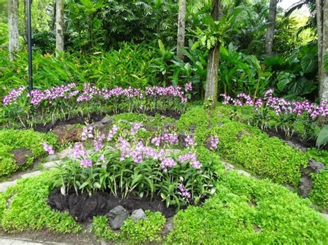 plants in singapore botanic gardens singapore botanic garden picture of singapore botanic gardens singapore tripadvisor