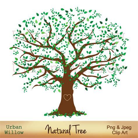 elm tree meaning 100 elm tree meaning tree care bloomington blog