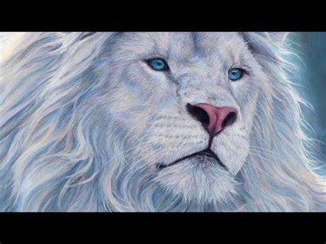 imagenes animales bellos los 10 animales m 225 s hermosos del mundo youtube
