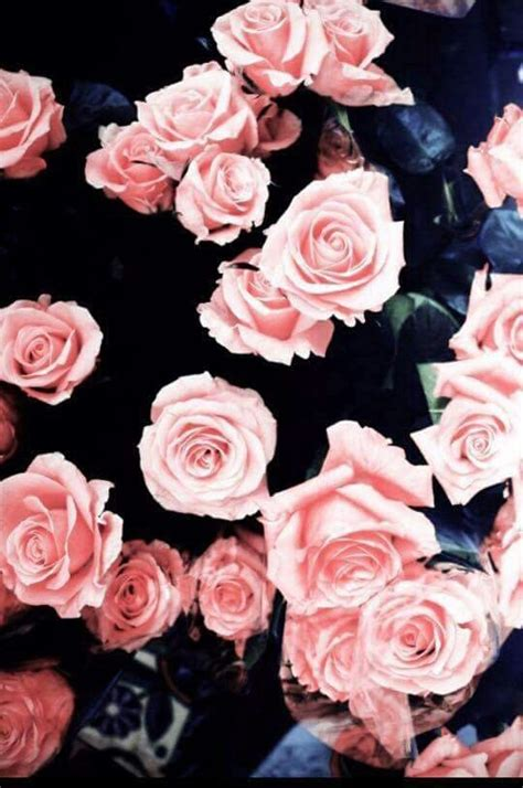 wallpaper girly flowers flowers girly roses wallpapers image 3476031 by