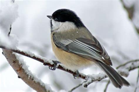 feeding maine birds in winter wilderness realty maine