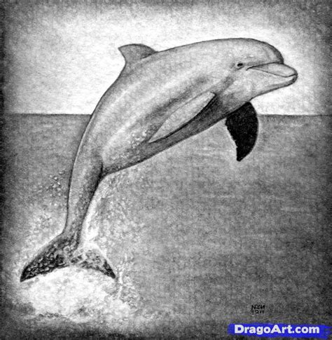 how to draw a realistic how to draw a realistic dolphin step by step realistic drawing technique free