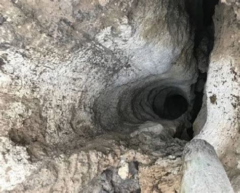 pugs in florida sinkhole swallows pug in northern florida earth changes sott net