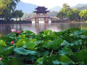 West Lotus Appreciate Lotus Flowers Hangshou West Lake Sightseeing