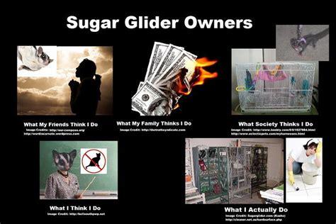 Sugar Meme - funny sugar gliders memes