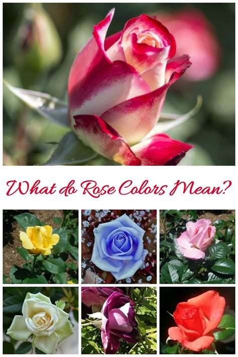 color of roses meaning 14 colors meanings for a thoughtful bouquet