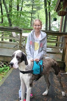 great dane service bless great danes on service dogs great danes and donkeys