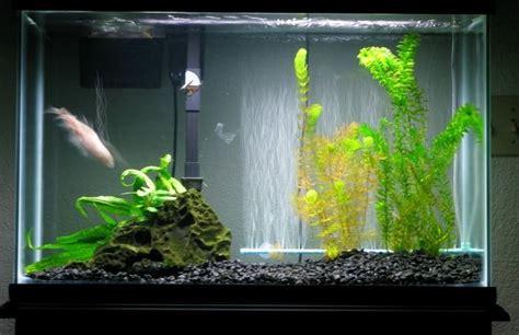 cara membuat lu hias untuk aquarium cara membuat aquarium tips panduan cara ternak lengkap