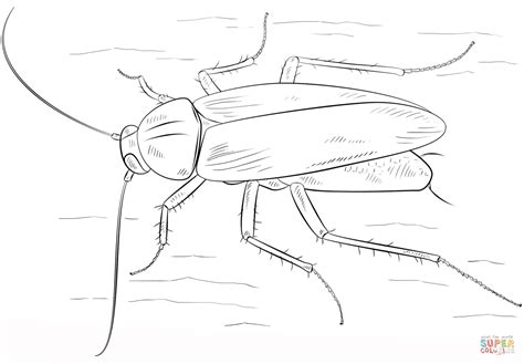 German Cockroach Coloring Page Free Printable Coloring Pages Cockroach Coloring Pages