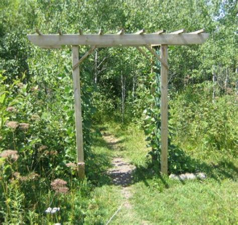 building an arbor trellis 21 brilliant diy backyard arbor ideas