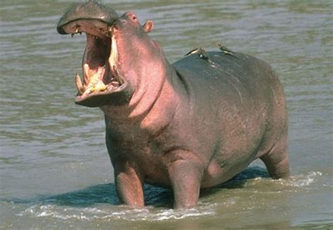 Top 10 Most Dangerous Animals by Most Dangerous Animals In The World Most Luxurious List