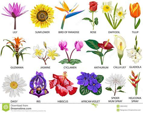 specie fiori 18 specie di fiori variopinti fotografia stock immagine