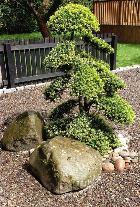 Garden Design With Pruning Plants 91 Best Images About Niwaki Cloud Pruning On Gardens Hindus And Taxus Baccata