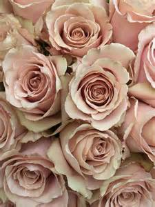blush colored flowers 25 best ideas about chagne colour on