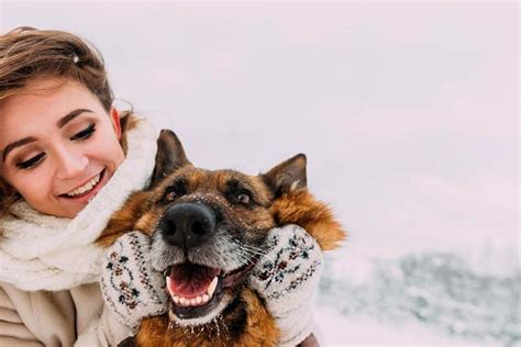 how often do dogs get their period how to tell if your is cold 8 signs you must out for
