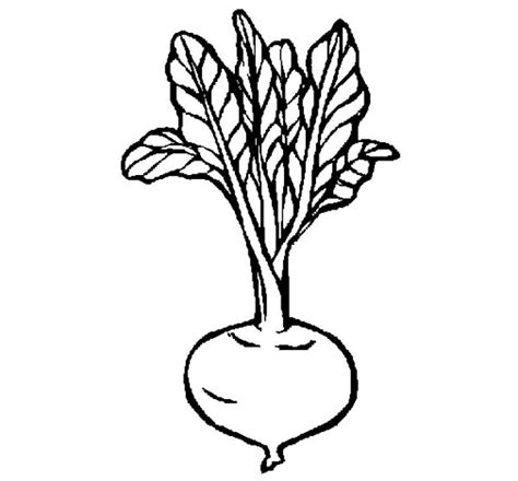 beet color beets coloring coloring pages