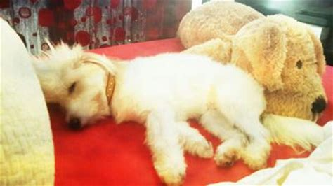 my puppy sleeps a lot my doesn t move than much sleeps a lot as as i m home and doesn t listen to