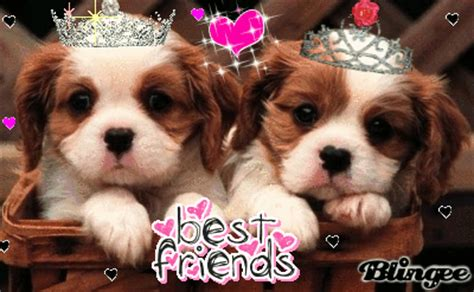 best puppies to get best friend puppies animated pictures for 131002072 blingee