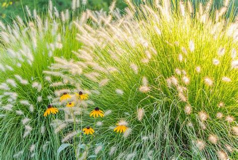 gr 228 ser bepflanzung im garten ziergras tipps - Ziergras Garten
