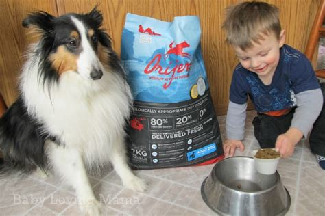 orijen puppy food reviews orijen pet food delivered to your door from mrchewy review finding zest