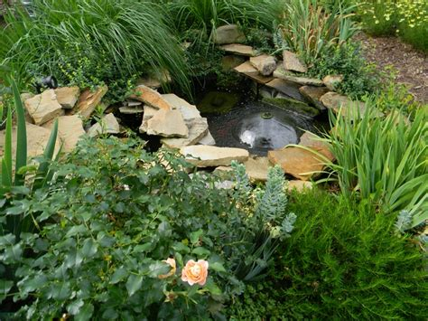 frog pond backyard frog pond the raccoons are going to be happy too