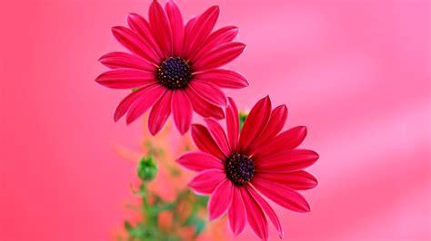 imagenes flores de otoño gifs y fondos pazenlatormenta fondos de pantalla de flores