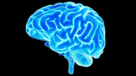 brain images your amazing brain