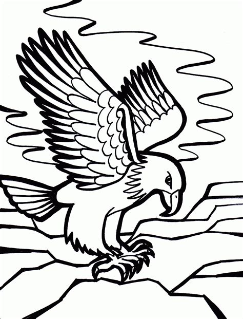 bird coloring pages coloring pages  print