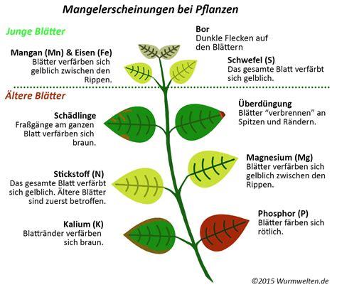 Garten Pflanzen Erkennen by Mangelerscheinungen Bei Pflanzen Erkennen D 252 Nger