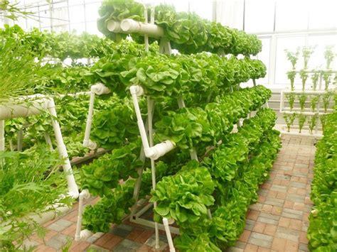 vertical gardening hydroponic grow system hydroponics