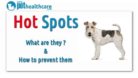 Home Remedies For Hotspots On Dogs by Spots On Dogs Hairstylegalleries