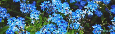 linkedin background image 23 free linkedin backgrounds and cover photos the muse