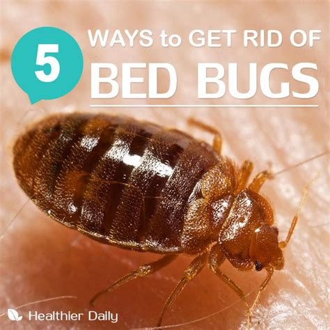 ideas  signs  bed bugs  pinterest fold towels bed bugs  box springs