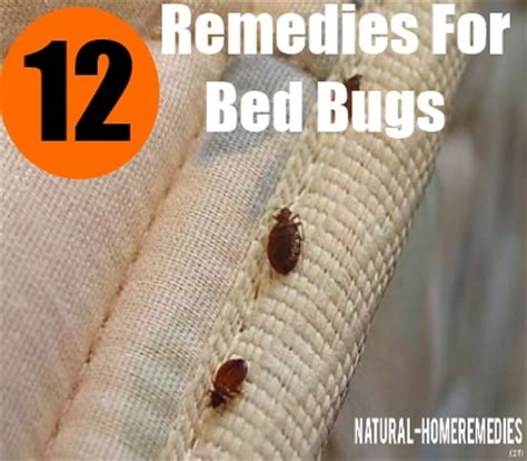 natural remedies for bed bugs 12 herbal remedies for bed bugs how to cure bed bugs