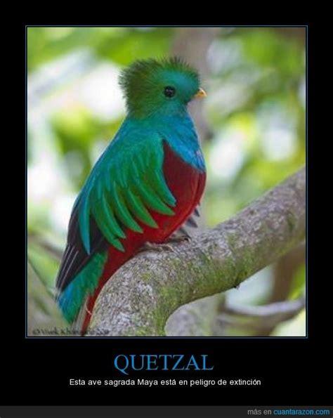 fotos de tatuajes de quetzales 161 cu 225 nta raz 243 n quetzal