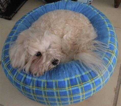 small dog beds dog bed showcase