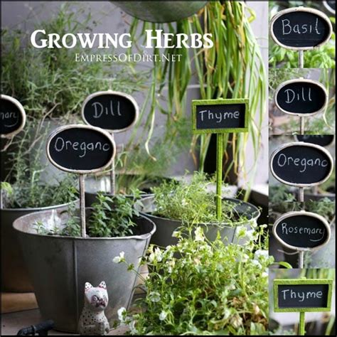 the ultimate guide to growing herbs jamie oliver features grow herbs indoors bob vilas blogs the ultimate guide to